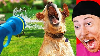 Funniest DOGS vs WATER Moments