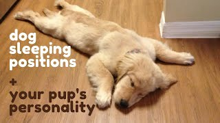 7 Dog Sleeping Positions Your Pup Reveals Their Personality