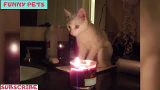 😂 Funny Pets: Funny Cats 😹 Playing With Candles 🕯️ (2019) Compilation 😂
