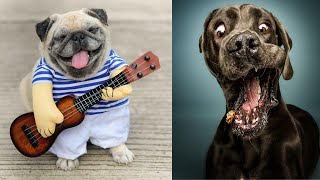 Funny And Cutest Dogs Compilation | Funny Dogs!!